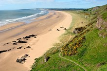 St Cyrus National Nature Reserve: Please credit Lorne Gill/Scottish Natural Heritage