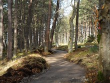 Loch Fleet NNR - Golspie Community Council's new all abilities footpath - part already completed by local firm Waverly Engineering (130318)