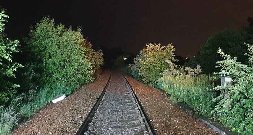 Tree cutting resumes on East Kilbride and Barrhead lines.: EK before 3