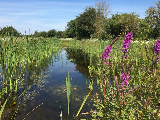 On World Environment Day, HS2 CEO salutes the 'Biggest environment project in Britain': Finham Brook Pond