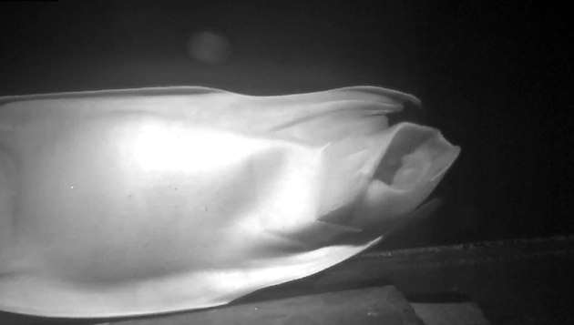 World first as endangered skate egg hatches: The moment of hatching ©NatureScot/SAMS