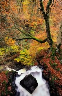 Autumnal woodland and the Urlar burn at the Birks of Aberfeldy. ©Lorne Gill-NatureScot