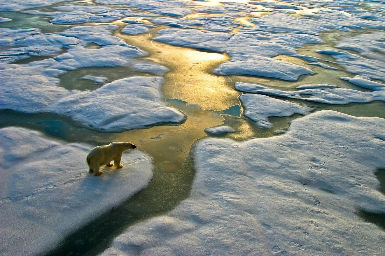Siemens welcomes Net Zero climate report: Polar-Bear