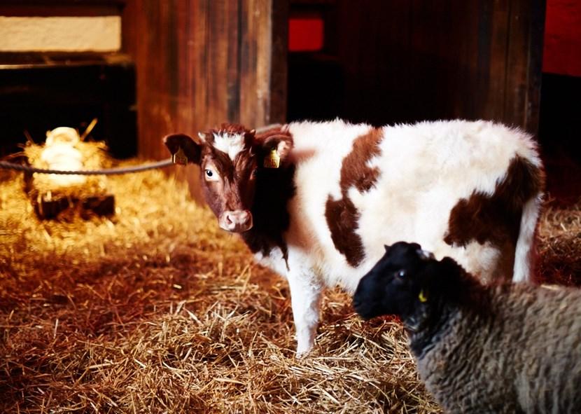 Enjoy the magic of Christmas at Home Farm: homefarm-december201526.jpg