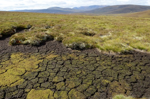 Risk of extreme droughts likely to increase in Scotland: Dried out peat at a Peatland Action site in the Cairngorms National Park ©Lorne Gill NatureScot