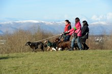 Commercial dog walkers near the Falkirk Wheel ©Lorne Gill-NatureScot