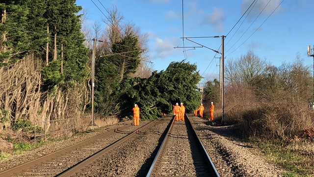 Network Rail to carry out overnight repairs after Storm Fionn brings down trees between Norwich and Diss: Trees between Norwich and Diss (5)