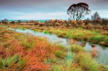 Flanders Moss National Nature Reserve - credit Lorne Gill-NatureScot