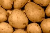 Agriculture-potatoes-crop-farming: iStock -File #4591988 - 'Potato crop' - 02-10-2013