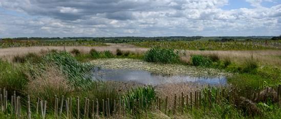 Tree planting and pond creation, Cubbington: Credit: HS2 Ltd