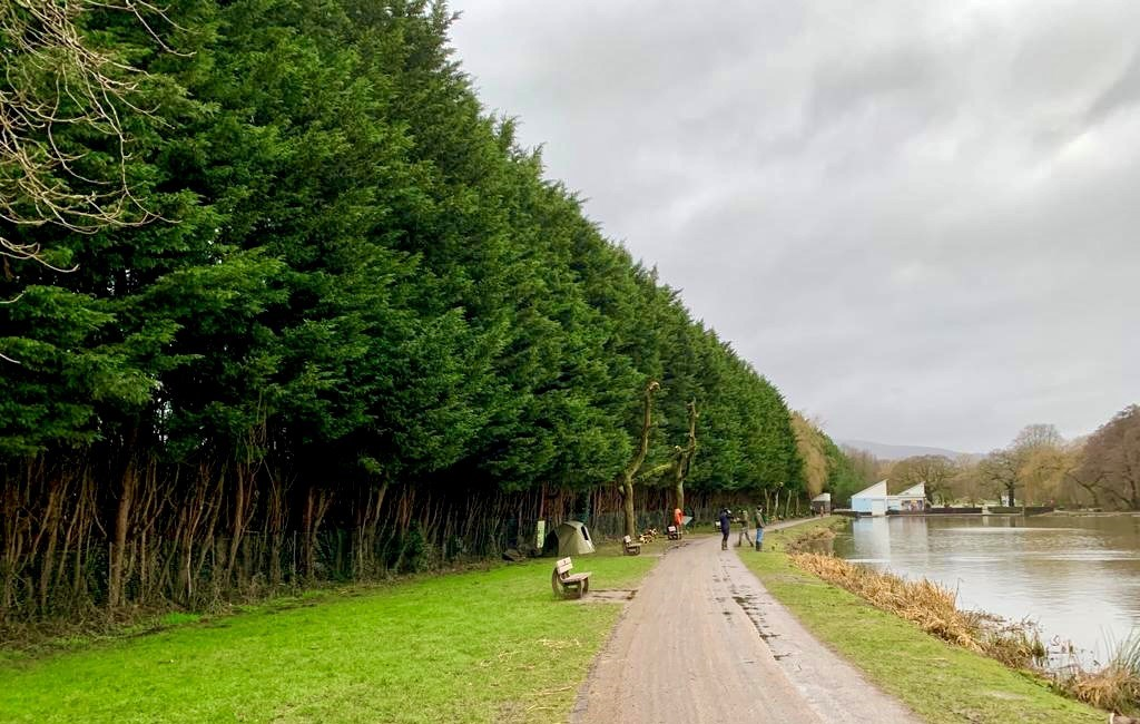 Emergency tree felling at Cwmbran Park over safety concerns: cwmbran park tree fell 2