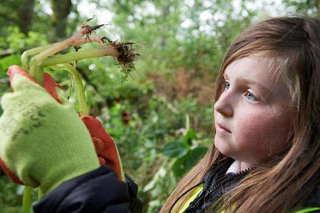 Alien Detectives wanted!: Removing Himalayan balsam ©SISI project