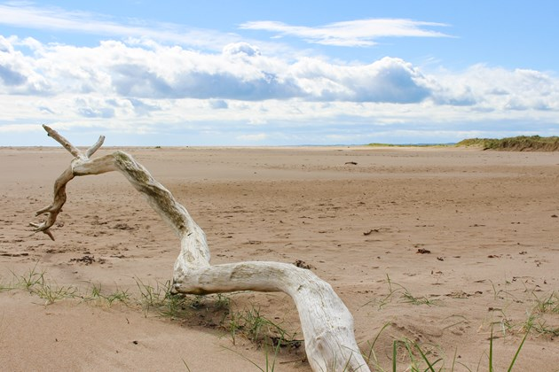 Call for poetry inspired by Tentsmuir nature reserve: Tentsmuir NNR - credit SNH