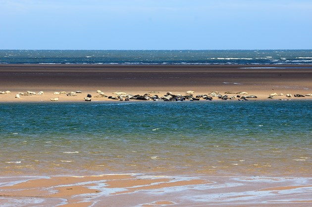 Tentsmuir nature reserve In Tune With Nature winner announced: Tentsmuir National Nature Reserve  (1)