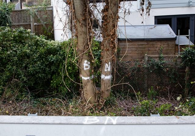 birds nesting - don't cut down! Whitstable