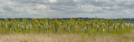 South Cubbington Wood, Warwickshire - tree planting: Credit: HS2 Ltd