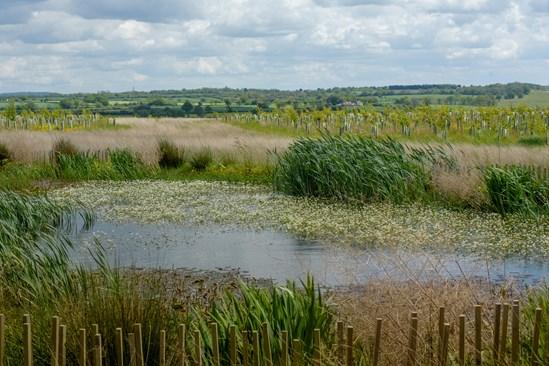 Cubbington Wood environmental mitigation site with ponds and tree planting: Credit: HS2 Ltd