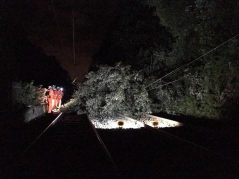 Cross City line second tree on line at night