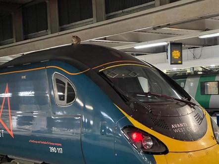 Avanti West Coast Train Surfing Cat 1