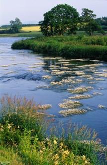 River Tweed©Lorne Gil-NatureScot
