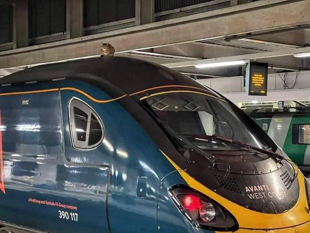 Cat sat on Avanti West Coast Euston to Manchester service