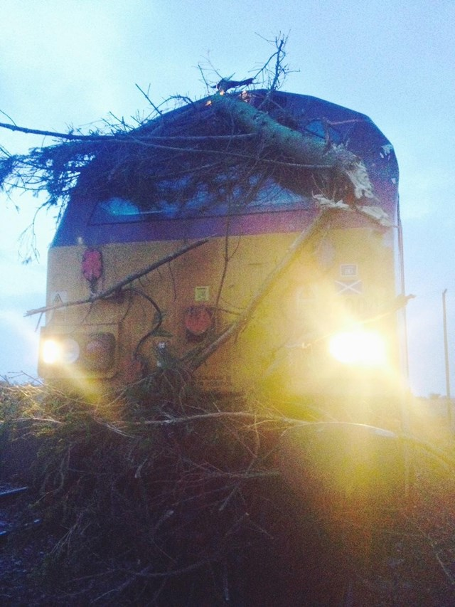 A fallen tree damages a train near Cupar, Scotland during a storm in January 2015: Sleeper service strikes tree near Cupar during Jan 9 storm ORBIS