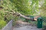 Severe weather warning: Emergency-wind-damage-tree