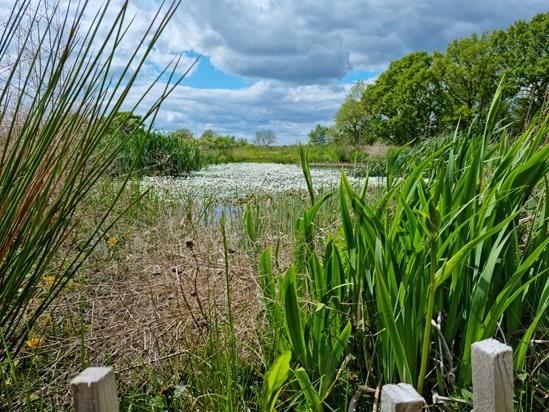 Established pond habitat in Cubbington Woods: Credit: HS2 Ltd
