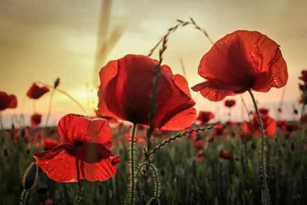 Remembrance Day services
