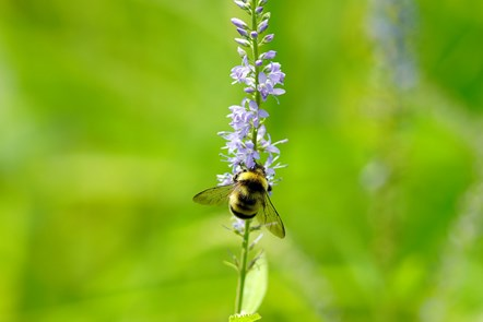 Cotswold District Council Leads the Way With New Advice to Help Developers Go Green: bee