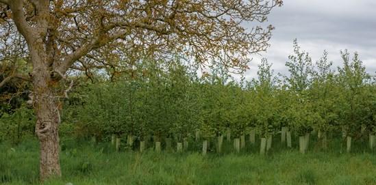 Finham Brook, Warwickshire : Credit: HS2 Ltd