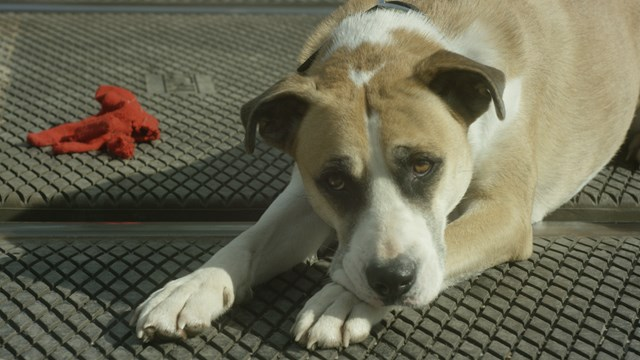 Still from Take the Lead - dog walkers level crossing safety film (2)