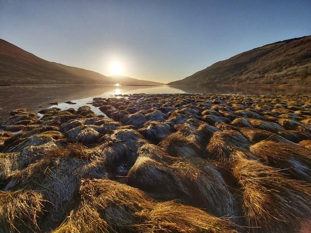 saltmarsh at the head of Loch Fyne, Argyll