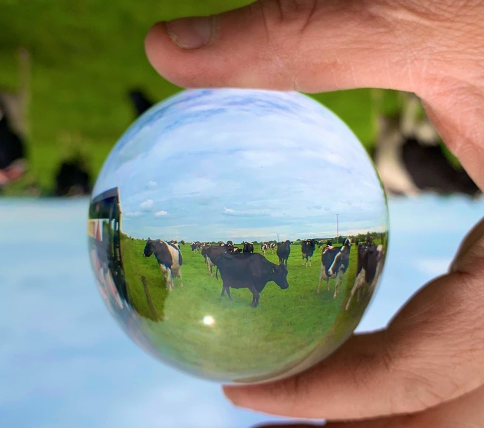 Crystal ball three Credit James Muir, an Arla farmer from Staffordshire  Twitter muirtwit