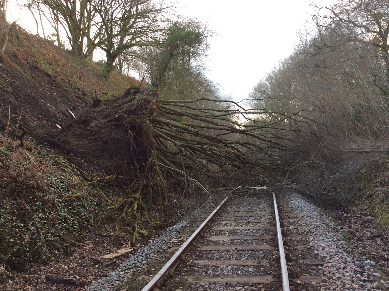 A tree on the line at Cynghordy in Carmarthenshire