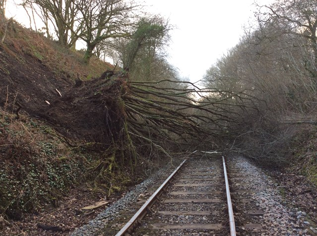 Arriva Trains Wales and Network Rail work around the clock to weather the storm: A tree on the line at Cynghordy in Carmarthenshire
