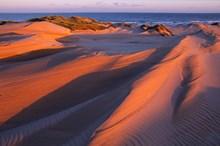 Forvie National Nature Reserve-5