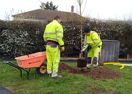 Tree planting in south Reading