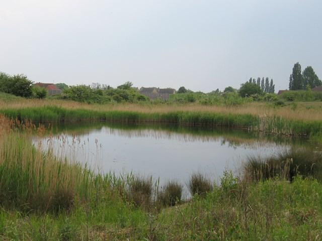 Whitemoor Yard ponds