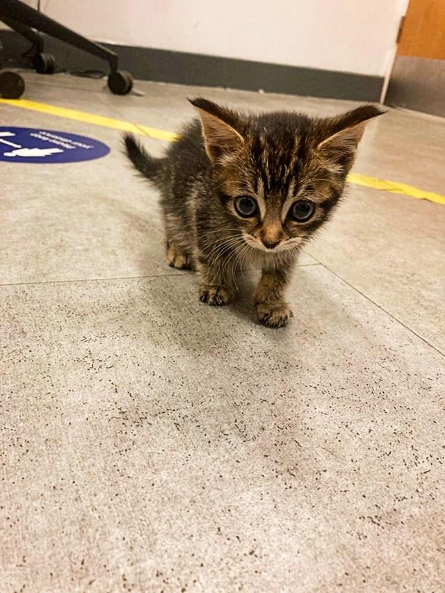 CrossCountry cat 1-2