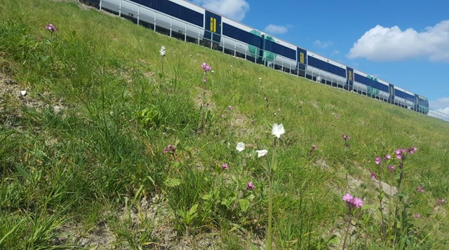 Award-winning Network Rail infrastructure project brings biodiversity to Bermondsey: WildflowersBDU