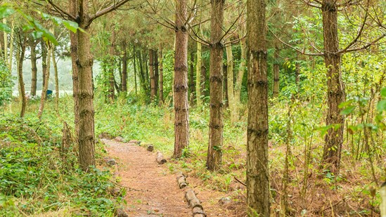 New £5 million fund to create and restore woodlands: new native woodland-2