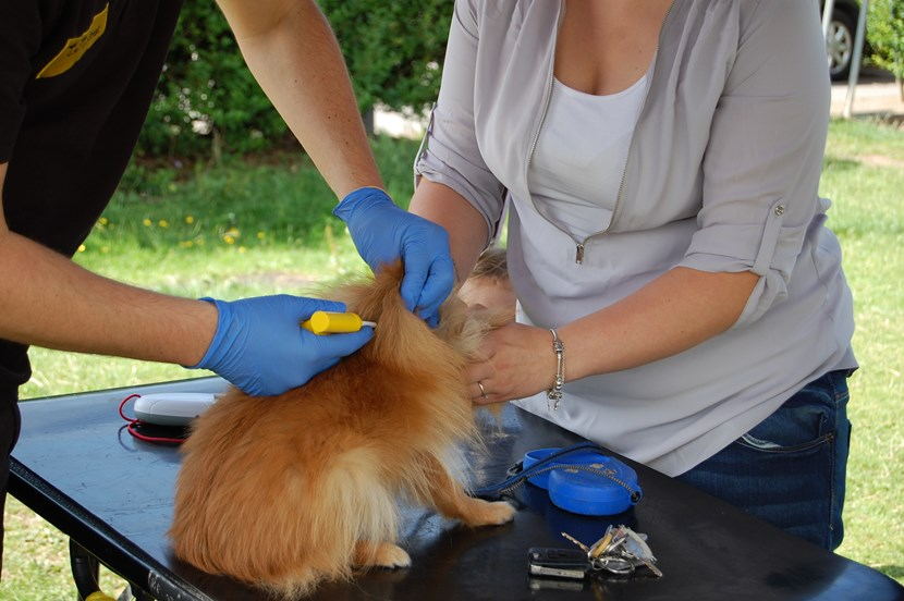 Owners warned that dog microchipping grace period is over: dsc_0950.jpg