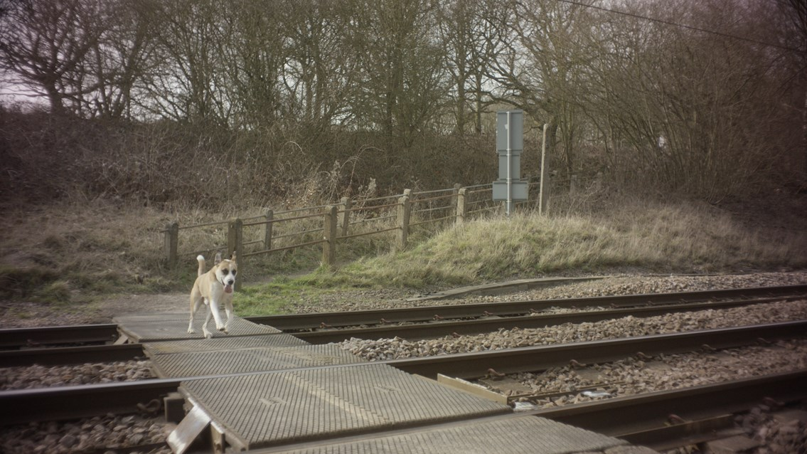 Keep your dog on a lead or you're on dangerous ground, urges new level crossing campaign: Still from Take the Lead - dog walkers level crossing safety film (1)