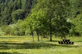 Healthy roots: Environment-woodland-forestry-park