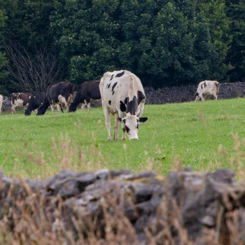 Generic farm images