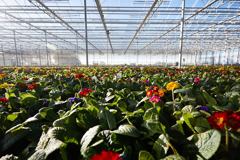 New purpose-built horticultural nursery set to officially open its doors to the public this weekend: glasshouseshot.jpg