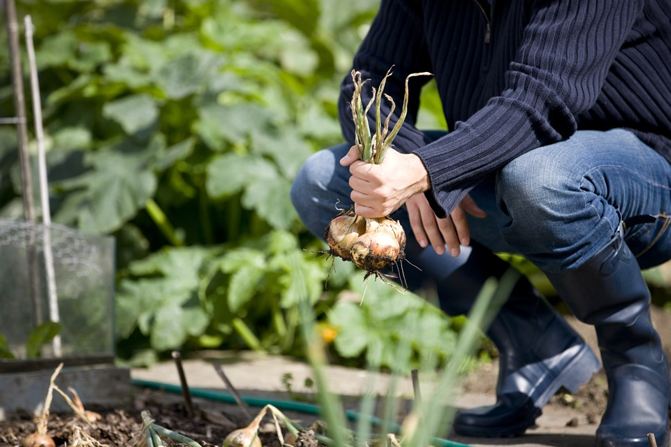 Community food growing