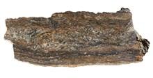 Rhynie Chert fossil