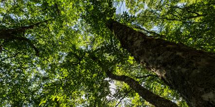 Diwrnod Amgylchedd y Byd – Arian newydd i natur yn helpu cymunedau i fraenaru'r tir ar gyfer y Gymru rydym am ei gweld ar ôl Covid-19.: Trees